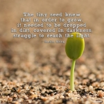 Flourish Like A TinySeed